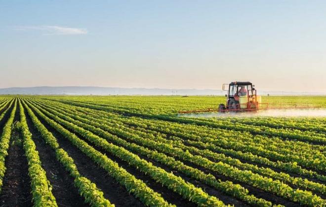 Agricultura do sudoeste alentejano continua a alimentar o país