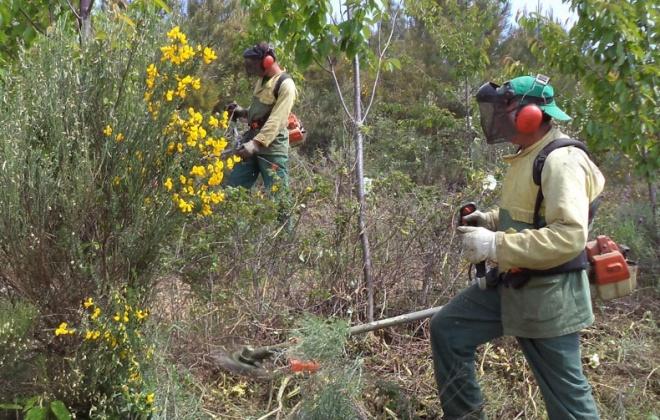 GNR começa a fiscalizar incumprimentos na limpeza da floresta e a aplicar coimas