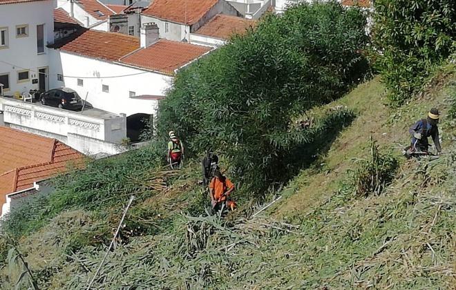 Vegetação do miradouro, encosta do castelo e estrada de Santa Luzia está a ser aparada