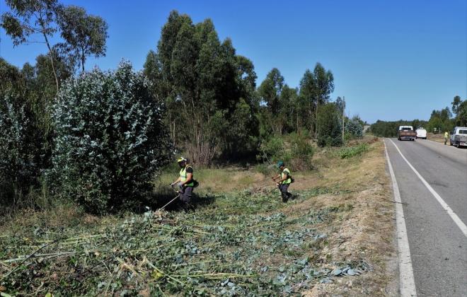 Grândola continua a realizar a limpeza das faixas de gestão de combustível