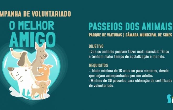 Município de Sines cria programa de voluntariado para passeios de animais