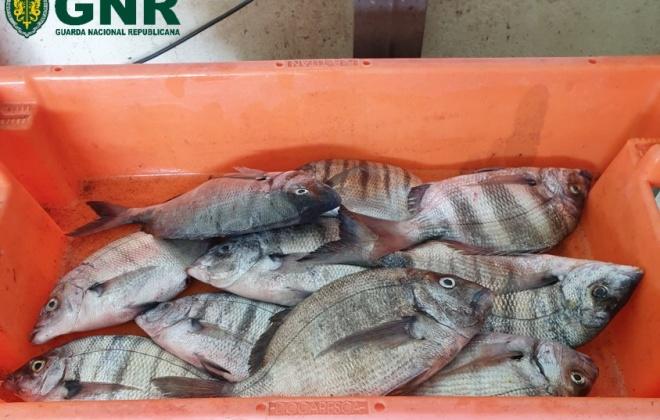 UCC apreende pescado por fuga à lota da Entrada da Barca em Odemira